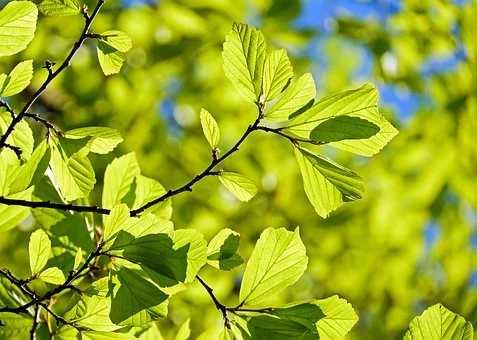 Naturen påvirker vores sundhed
